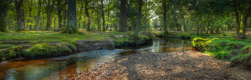 New Forest-11